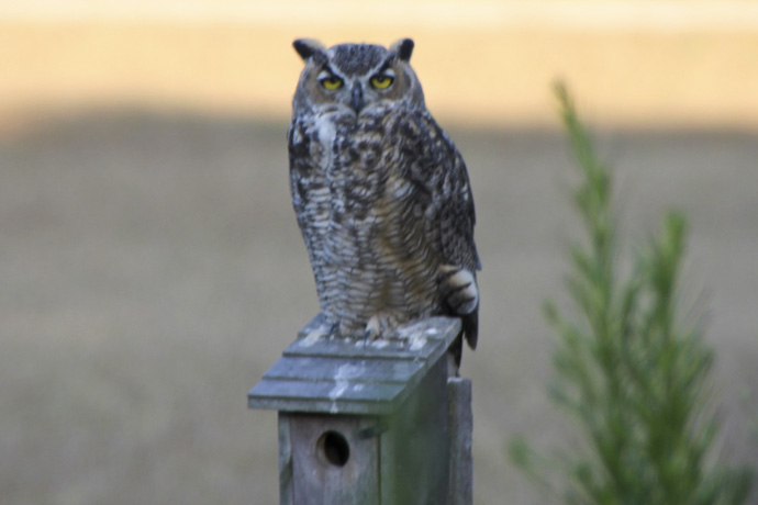 owl on birdhouse